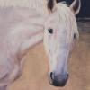 Dutch II Horse